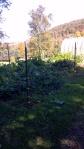 The salad garden.